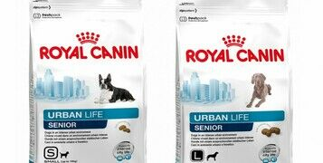 Wet Vs. Dry Dog Food - Which Is Better For My Dog