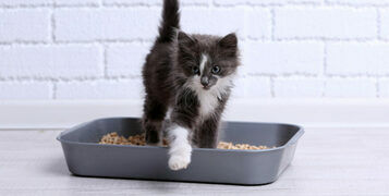 What Are The Benefits of Non-Clumping Cat Litter?