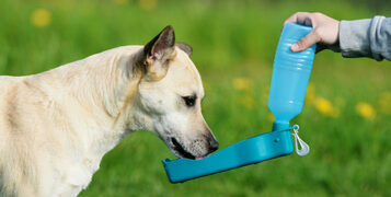 Three Ways To keep Your Dog Hydrated