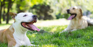 Caring for your Pets During a Heatwave