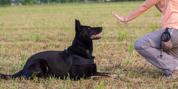 Training Your Dog Out Of Bad Behaviour