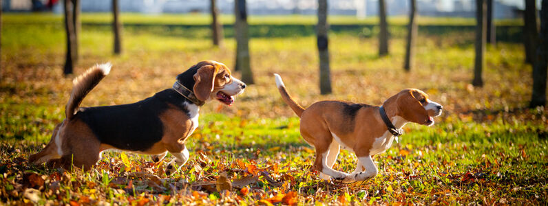 Top Tips For Walking Your Dog In Autumn