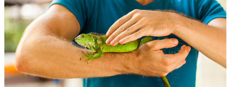 How to Care for Reptiles Part 1
