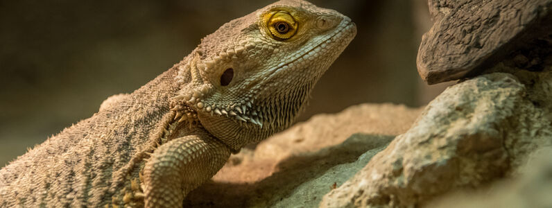 Keeping Live Reptile Food