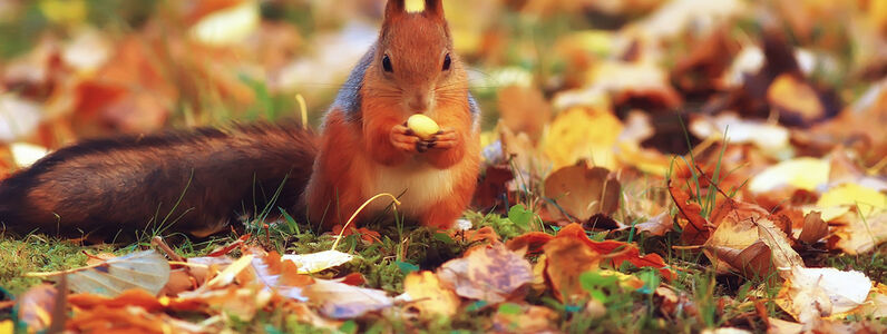 A Guide to Autumn Wildlife