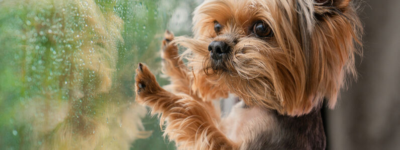 How To Reduce Dog Separation Anxiety When You Return To Work