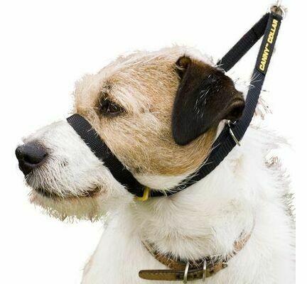 Canny Collar Dog Training Collar Black
