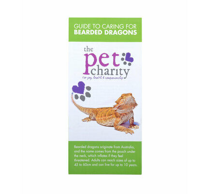 The Pet Charity Bearded Dragon Care Guide