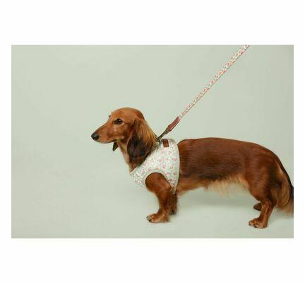 Cath Kidston Provence Rose Comfort Walking Dog Harness