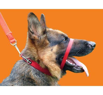 Canny Collar Dog Training Collar Red