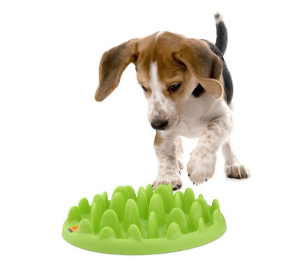 Company Of Animals Green Interactive Mini Slow Feeder