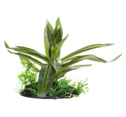 Fluval Plant Giant Sagittaia 10cm