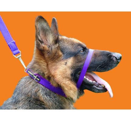 Canny Collar Dog Training Collar Purple