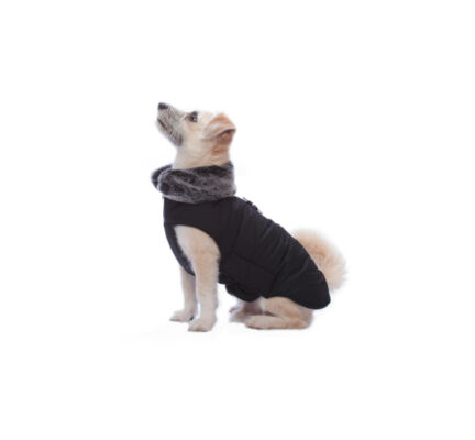 Dog Gone Smart Waterproof Tamarack Dog Coat in Black