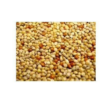 Willsbridge Mixed Millet Seeds 20kg