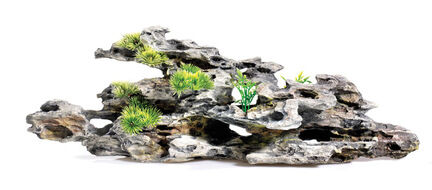 Classic Driftwood Delights Driftwood With Plants